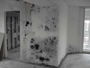 Toxic Black Mold (Stachybotrys) Damage in Home Resulting in Mold Remediation
